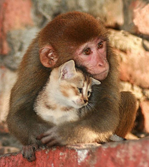 cat-and-monkey