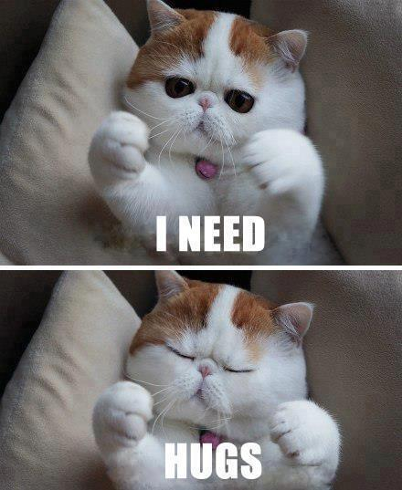cat-needs-hugs