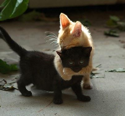 kitten-hugs