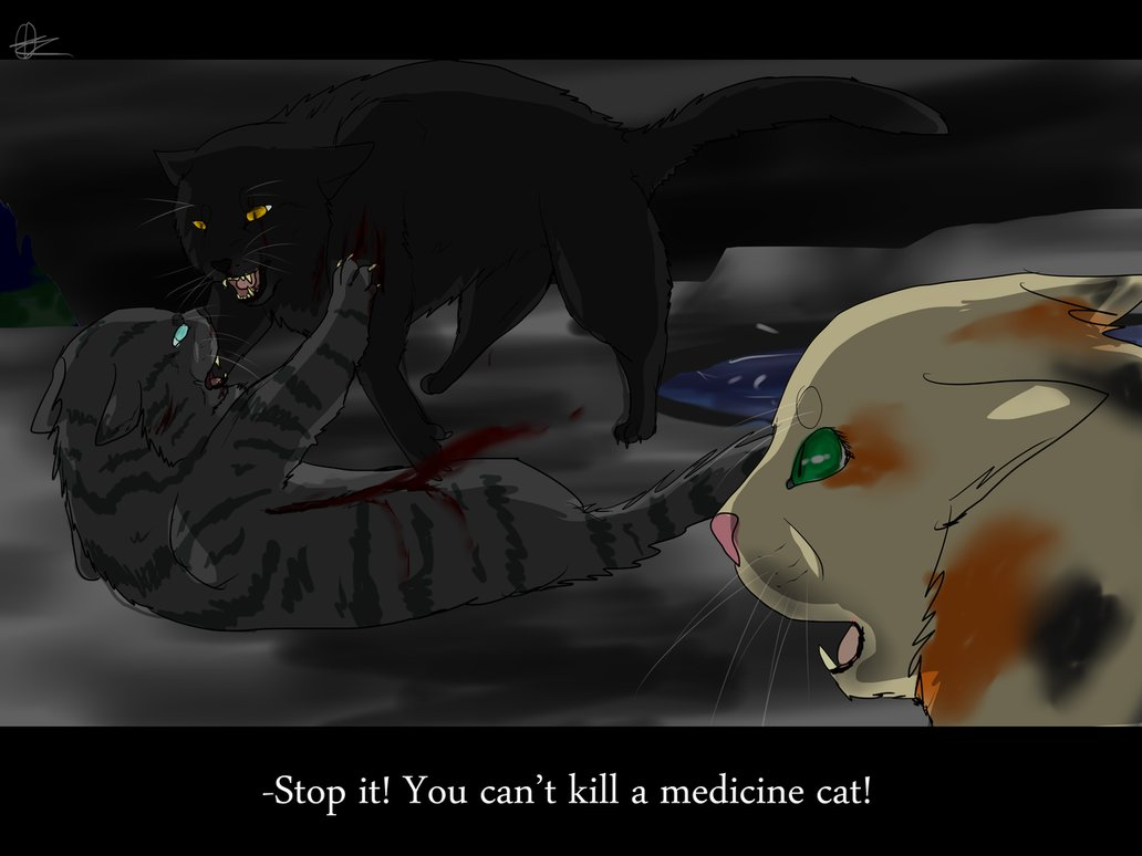 Warrior Cats Hollyleaf And Breezepelt Fanfiction Breezepelt