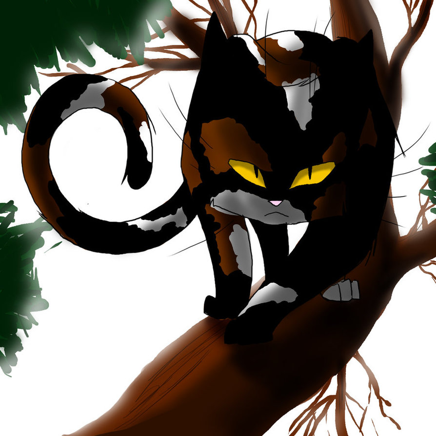 Warrior Cats A Vision Of Shadows Book 1: Warrior_Cats__Sol_by_WhiteFlameSoul