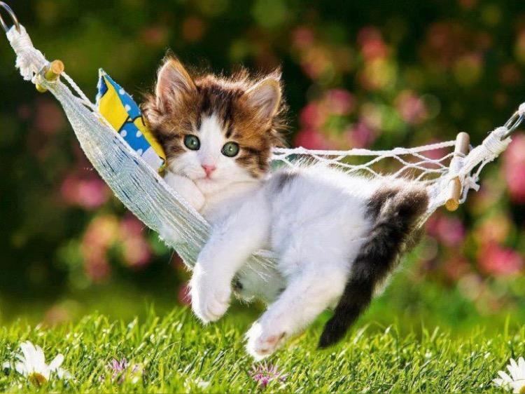 kitty-hammock
