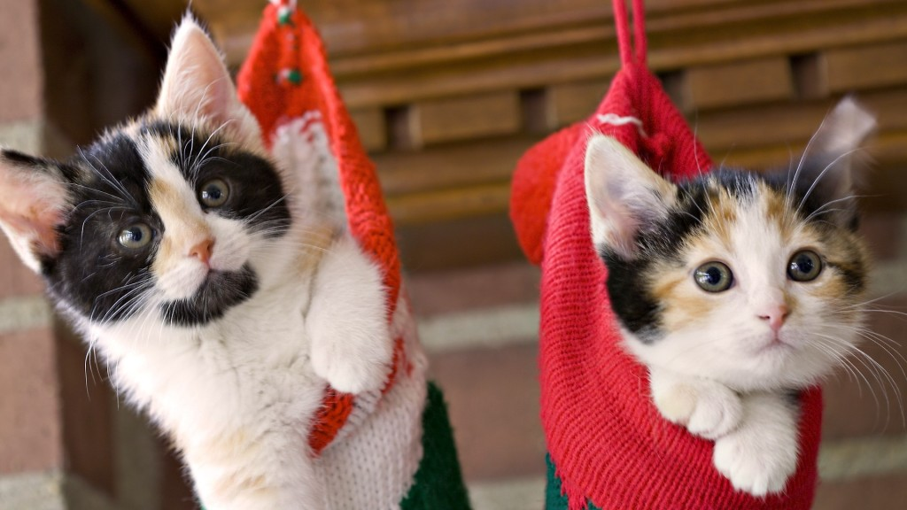 beautiful-christmas-cats-